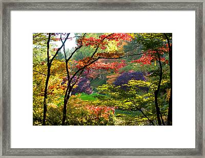 Trees In A Garden, Butchart Gardens Framed Print by Panoramic Images