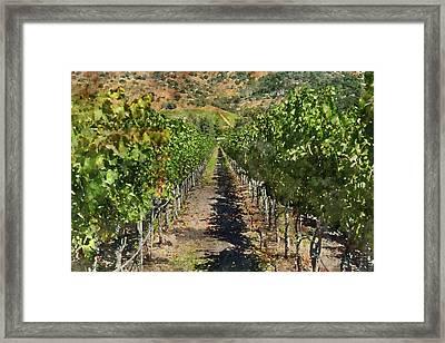 Vineyard In Napa Valley California Framed Print by Brandon Bourdages