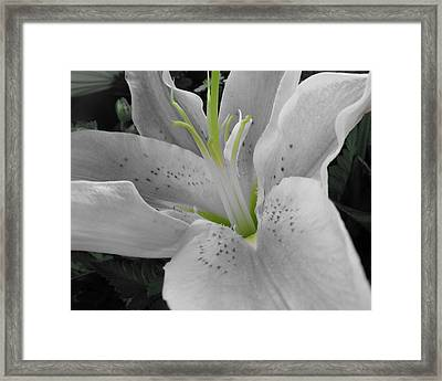 White Lily Framed Print by Michele Caporaso