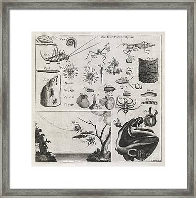 Zoological Illustrations, 18th Century Framed Print by Middle Temple Library