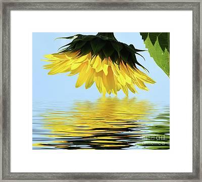 Nice Sunflower Framed Print