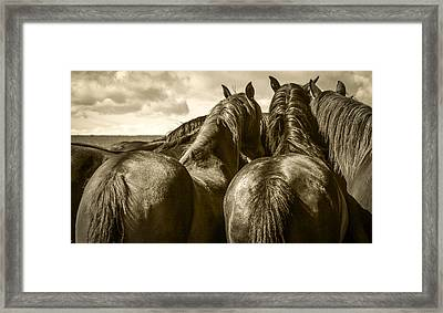 #5815 - Mortana Morgan Mares Framed Print