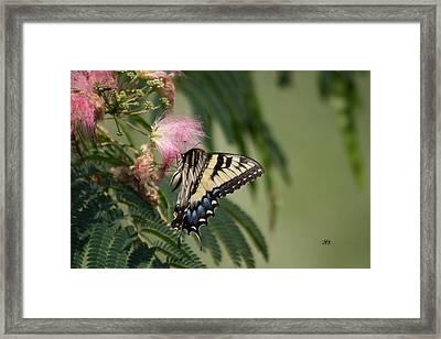 5818 1 Framed Print by Jim Simms
