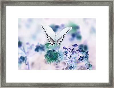 5844 2 Framed Print by Jim Simms