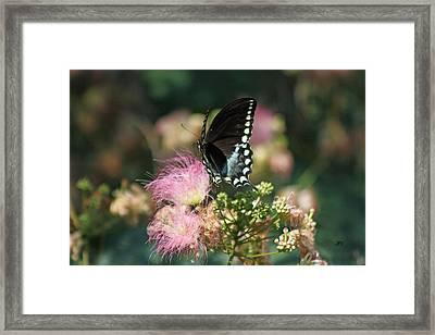 5846 1 Framed Print by Jim Simms