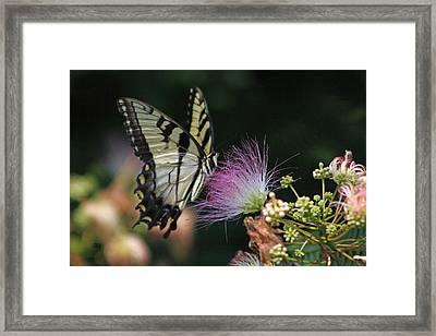 5849 1 Framed Print by Jim Simms