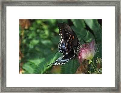 5873 1 Framed Print by Jim Simms