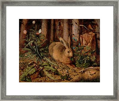 A Hare In The Forest Framed Print by Hans Hoffmann