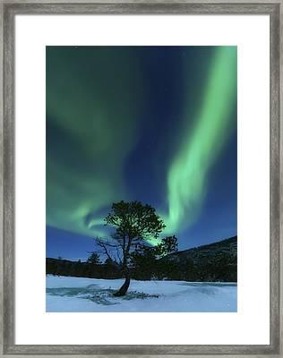 Aurora Borealis, Forramarka, Troms Framed Print by Arild Heitmann