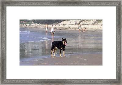 Australia - Dog Waits On Beach Framed Print by Jeffrey Shaw