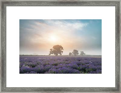 Beautiful Dramatic Misty Sunrise Landscape Over Lavender Field I Framed Print