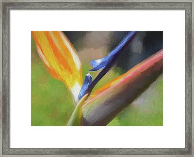 6 Bird Of Paradise Impression Finish Framed Print