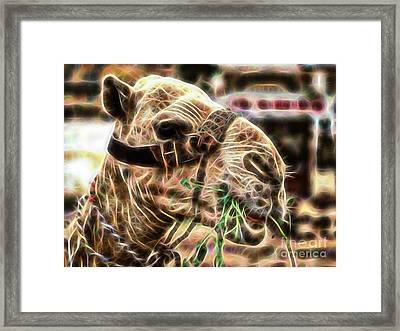 Camel Collection Framed Print