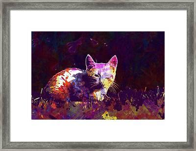 Framed Print featuring the digital art Cat Eye Injury One Eye Village  by PixBreak Art