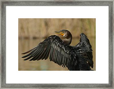 Framed Print featuring the photograph Drying Out by Fraida Gutovich