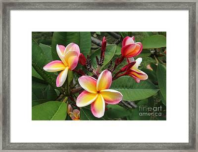 Flowers Framed Print by Anthony Jones