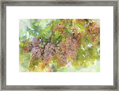 Grapes On The Vine Framed Print by Brandon Bourdages