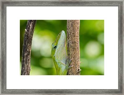 Green Lizard Framed Print