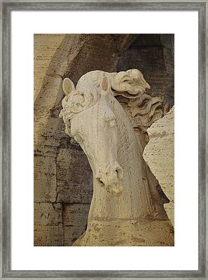 Navona Steed Framed Print by JAMART Photography