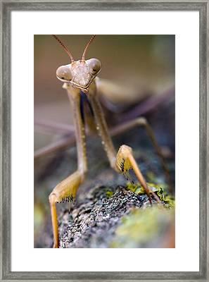 Mantis Framed Print by Andre Goncalves