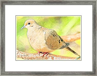 Mourning Dove Animal Portrait Framed Print