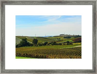 Napa Valley California Vineyard Framed Print