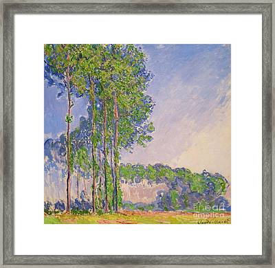 Poplars Framed Print by Claude Monet