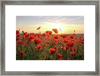 Poppys Sunset Framed Print by Steffen Gierok