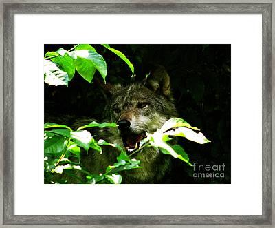 The Wild Wolve Group B Framed Print by Debra     Vatalaro