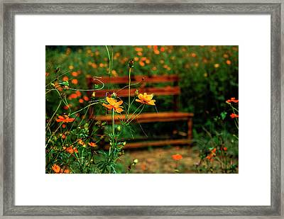 Galsang Flowers In Garden Framed Print