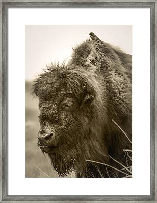 #6389 - The Traveler Framed Print