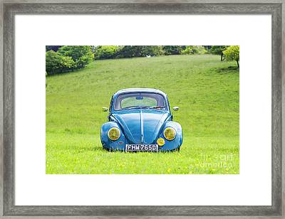 66 Beetle Framed Print by Tim Gainey