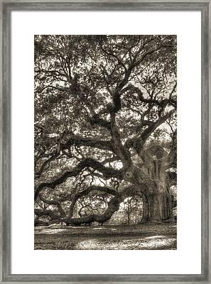 Angel Oak Live Oak Tree Framed Print