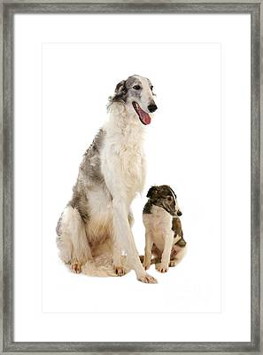 Borzoi Or Russian Wolfhound Framed Print