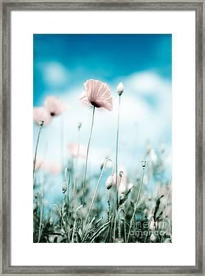 Corn Poppy Flowers Framed Print