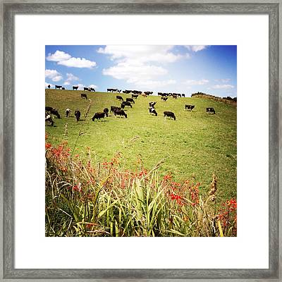 Dairy Cows Framed Print by Les Cunliffe