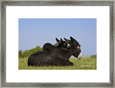 Donkey And Foal Framed Print by Jean-Louis Klein & Marie-Luce Hubert