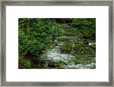 Framed Print featuring the photograph Kens Creek Cranberry Wilderness by Thomas R Fletcher
