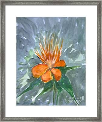 Love Flowers Framed Print by Baljitchadha