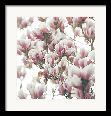 Seasonal Bloom Framed Prints