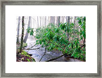 Middle Fork Of Williams River Framed Print by Thomas R Fletcher