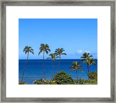7 Palms Framed Print by Nicole I Hamilton