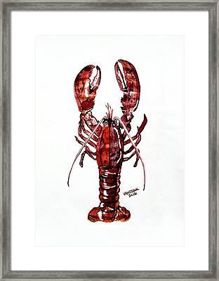 Red Lobster Framed Print by Scott D Van Osdol