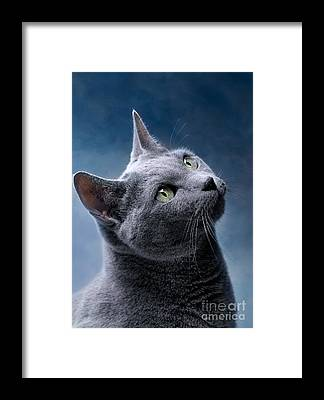 Domestic Cat Framed Prints