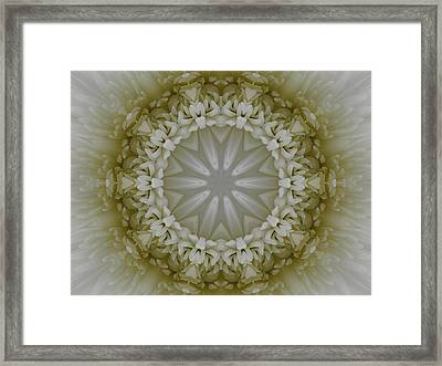 Spider Mum Framed Print by Michele Caporaso