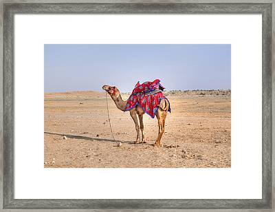 Thar Desert - India Framed Print by Joana Kruse