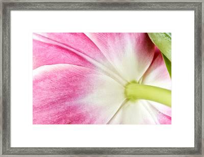 Tulip Framed Print by Mark Johnson