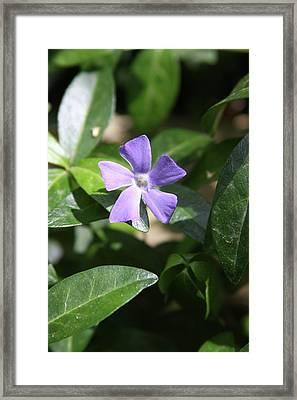 Flowers Framed Print by Luke Robertson