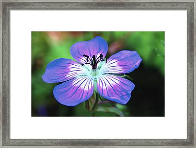 Untitled Framed Print by Paul Drewry