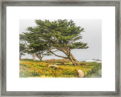 #7803 - Monterey, California Framed Print